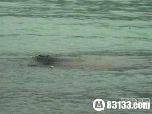 【图】喀纳斯湖水怪真相:绝对超出你的想象_0